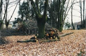 Faire du bois